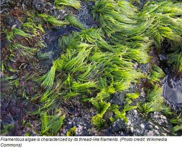 Irrigation_Control-Algae_Photo3