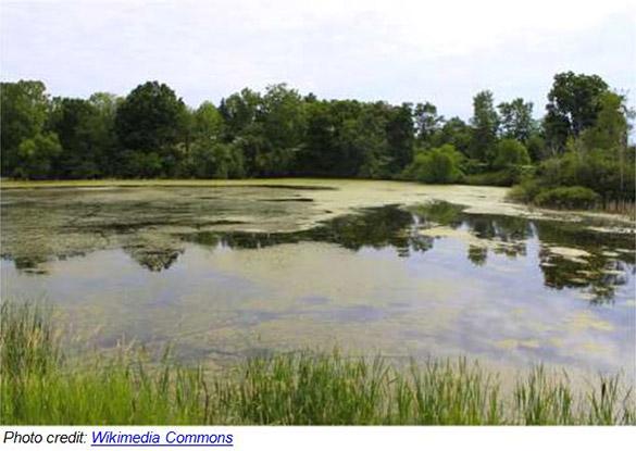 Irrigation_Control-Algae_Photo1