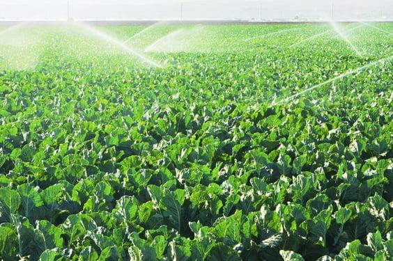 irrigation_chlorine.jpg